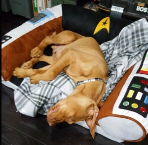 star trek bed
